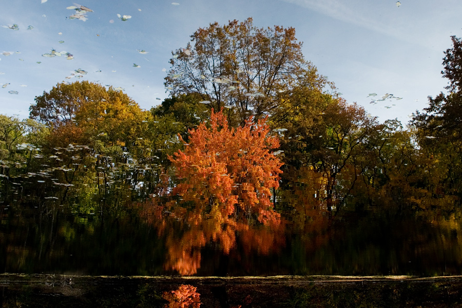 Early Autumn in Prospect Park