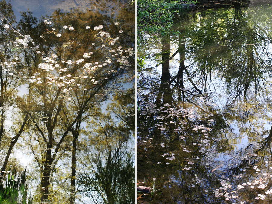 Reflection at the Brooklyn Botanic Gardens