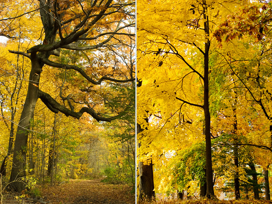 Prospect Park in Late Autumn