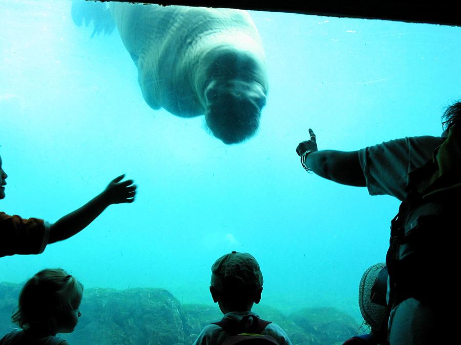 At the Brooklyn Aquarium 2003