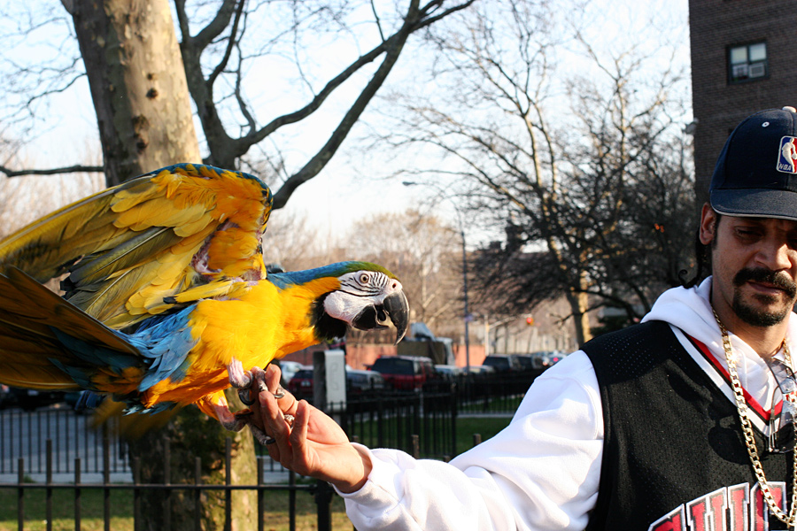 Man with a Parrot in the Farragut Houses in Vinegar Hill
