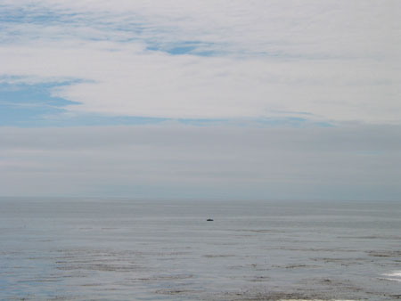 pacific coast highway, day 2, monterey