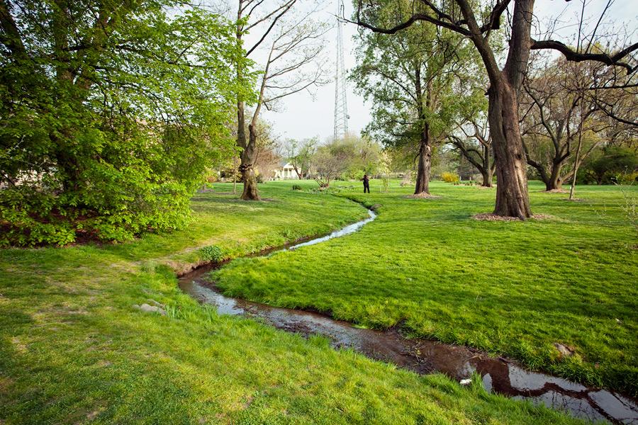 Backwoods at the Brooklyn Botanic Garden BLUEJAKE